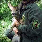 Agentes forestales, la policía del medioambiente