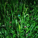 Photoespaña 2006 Naturaleza. | Manfred Willmann