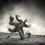 Sabores e imágenes de La Mancha