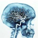 Semana de la Ciencia   Neurocultura