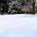 Conjuro de invierno