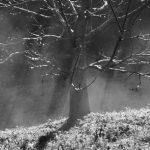 Recital de poesía: Memoria de la niebla