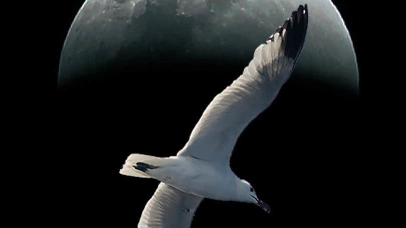Recital de poesía: Nocturno de pájaros