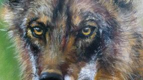 Exposición: Retratos salvajes