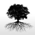 Encuentros de música tradicional: Volando de raíz