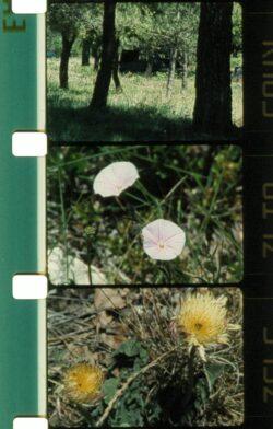 Screening Lav #04