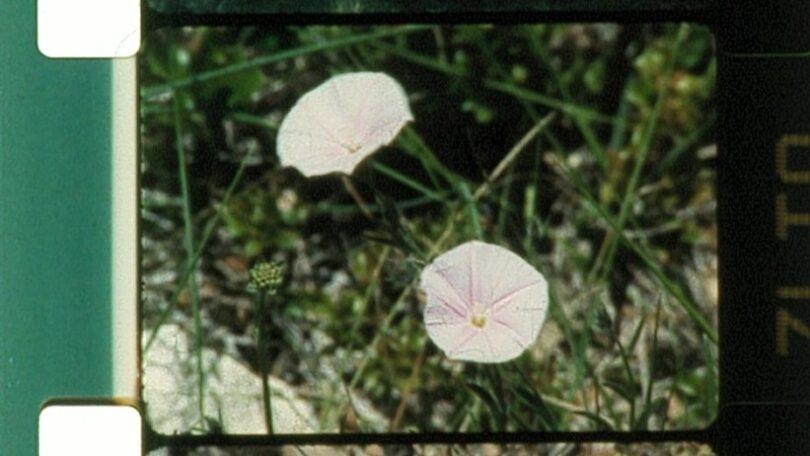 El jardín en la máquina. Variaciones de una primavera perdida / Screening Lav #04